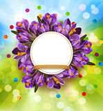 Vector festive background with blue crocuses and a round frame ( Stock Photography