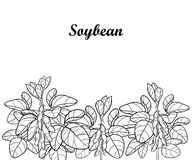Vector field with outline Soybean or Soy bean with pods and ornate leaf in black isolated on white background. Legume plant. vector illustration
