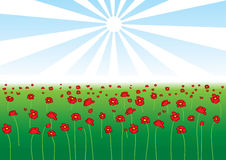 Vector field of poppy Royalty Free Stock Images