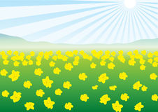 Vector fields with yellow flowers Royalty Free Stock Photos