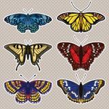 vector fijado con las mariposas Imagen de archivo libre de regalías