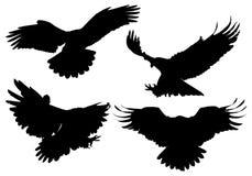 Vector fijado siluetas de Eagle Fotos de archivo