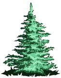 Big Pine tree. An Vector file `Big Pine tree Royalty Free Stock Image