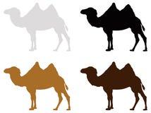 Camel silhouette - wildlife animal stock illustration