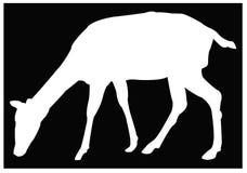 Doe or deer silhouette - hoofed ruminant mammal. Vector file of doe or deer silhouette - hoofed ruminant mammal vector illustration