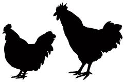 Poultry silhouette - domesticated birds kept by humans for their eggs, their meat or their feathers. Vector file of poultry silhouette - domesticated birds kept stock illustration