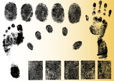 Vector Fingerprint Elements. Black and White Vector Fingerprint and footprint elements - Very accurately scanned and traced ( Vectors are transparent so it can Stock Image