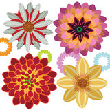 Vector fiower of Dahlia Stock Photo