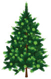 Vector Fir Tree Stock Photo