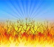 Vector  of Fire Elements. Vector Illustration of Fire Elements Royalty Free Stock Images