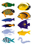 Vector fish. Colored vector fish, vector illustration Royalty Free Stock Photo