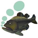 Vector fish black bass. On a white background Stock Photo
