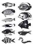 Vector fish, black and white. Vector illustration Stock Photos