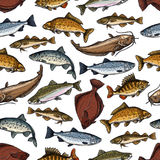 Vector fish pattern of seamless sea ocean fishes. Fish seamless pattern of sea or ocean fishes. Vector tile of marlin, flounder or salmon and trout, pike or Stock Images