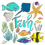 Vector fish set. Hand drawn marine  with colorful fishes Royalty Free Stock Photos