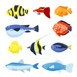 Vector fish set. Underwater and aquarium fishes. Set of fish vector for aquarium, sea and river animals illustration Royalty Free Stock Photography