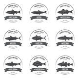 Vector fish silhouettes  labels  emblems.. Salmon  herring  sea bass mackerel  tuna trout  sardine  sea bream cod. Set of templates for stores  markets  food Stock Image