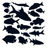 Vector fish silhouettes  Stock Photos