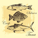 Vector fish sketch drawing - salmon, trout, carp, tuna. hand drawn sea food illustration. S Stock Images