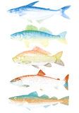 Vector fishes Stock Photos