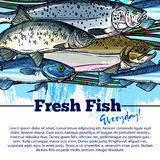 Vector fishing poster with fish catch. Seafood and fish catch poster. Vector design of fisherman salmon and tuna or herring and trout, pike and carp or flounder Stock Photography