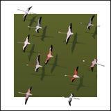 Vector flamingo's die over de groene rivier vliegen. Royalty-vrije Stock Afbeeldingen