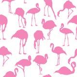 Vector flamingo seamless background Stock Photography