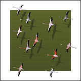 Vector flamingos flying over the green river. Royalty Free Stock Images