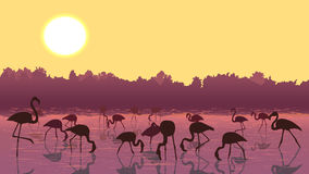 Vector flamingos at sunset in the river. Royalty Free Stock Photos