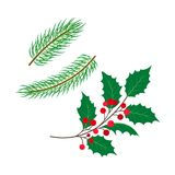 Vector flat holly, spruce leaves branch berry set. Stock Photos