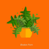 Vector flat illustration of indoor homeplant fern in pot. Illustration of houseplant, indoor and office plant in pot. Vector plant fern in pot. Flat fern, vector Stock Photos