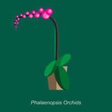 Vector flat illustration of indoor homeplant phalaenopsis orchids in pot Royalty Free Stock Images