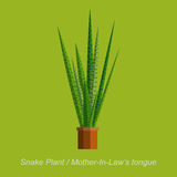 Vector flat illustration of indoor homeplant Snake plant in pot Royalty Free Stock Photo