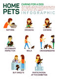 Vector flat illustration infographic of caring about pets dog. Bathing, washing, dressing, combing, veterinary. Inspection, going for a walk, crossbreeding royalty free illustration