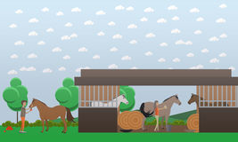Vector flat illustration of stable and people grooming horses Royalty Free Stock Image