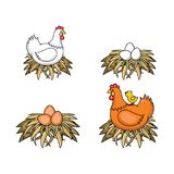 Vector flat poutry, farm chicken set. Vector flat poultry farm chicken set. Brown, white hen chickens, eggs in hay nest, yellow small chick sitting at chicken Royalty Free Stock Photography
