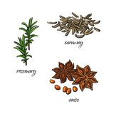 Vector flat sketch spices, condiments herbs set. Vector flat cartoon sketch hand drawn Spices, seasoning, flavorings and kitchen herbs set. Rosemary leaves with Stock Image
