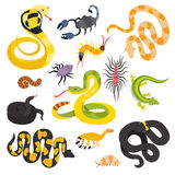 Vector flat snakes collection isolted on shite background Royalty Free Stock Images