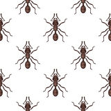 Vector flat style seamless pattern with ants. Icon for web. Isolated on white background. Children`s wallpaper Royalty Free Stock Photography