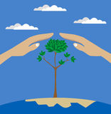 Vector flat style of two hands protecting tree Royalty Free Stock Images