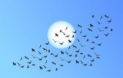 Vector flock of flying birds towards bright sun Royalty Free Stock Images