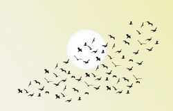 Vector flock of flying birds towards bright sun Royalty Free Stock Photography