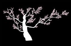 Vector floral abstracto de Sakura Flower Japanese Natural Background Fotos de archivo