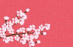 Vector floral abstracto de Sakura Flower Japanese Natural Background Imágenes de archivo libres de regalías