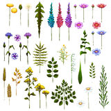 Vector floral Art Brushes for your design Stock Photos