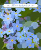 Vector floral background  forget-me-not  gift card Stock Image