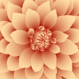 Vector floral background. Royalty Free Stock Image