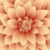 Vector floral background. Vector floral background of orange dahlia flower Royalty Free Stock Image