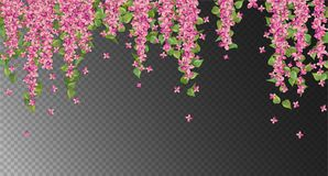 Pink Hanging Flowers. Vector floral background. Pink hanging flowers and leaves Royalty Free Stock Photo