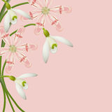 Vector floral background. Spring flowers. Stock Photos